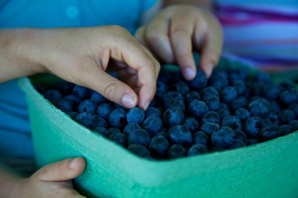 blueberryfestival