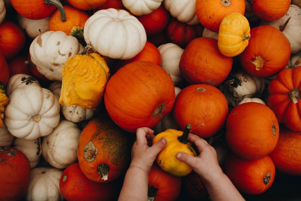 true surrey pick a pumpkin